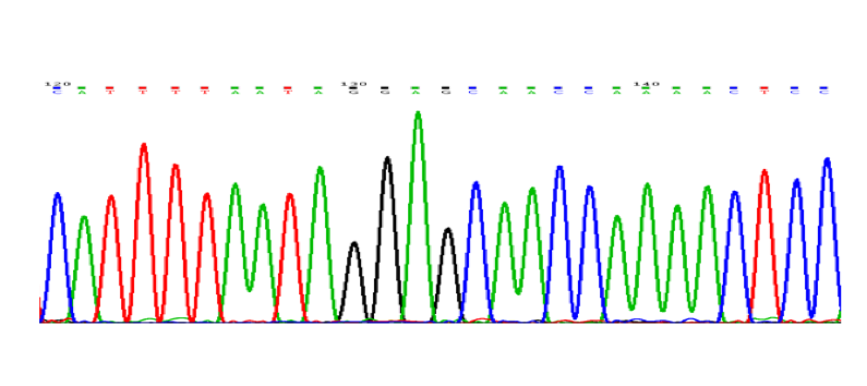 Figura 1.- El método Sanger para la secuenciación del ADN permite identificar el ordenamiento de las bases citosinas (picos azules), timinas (rojos) adeninas (verdes) y guaninas (negros) en los genes. La secuencia obtenida en el ADN de un paciente es comparada con el ADN de referencia, lo que permite identificar las mutaciones que originan enfermedades oculares monogénicas.