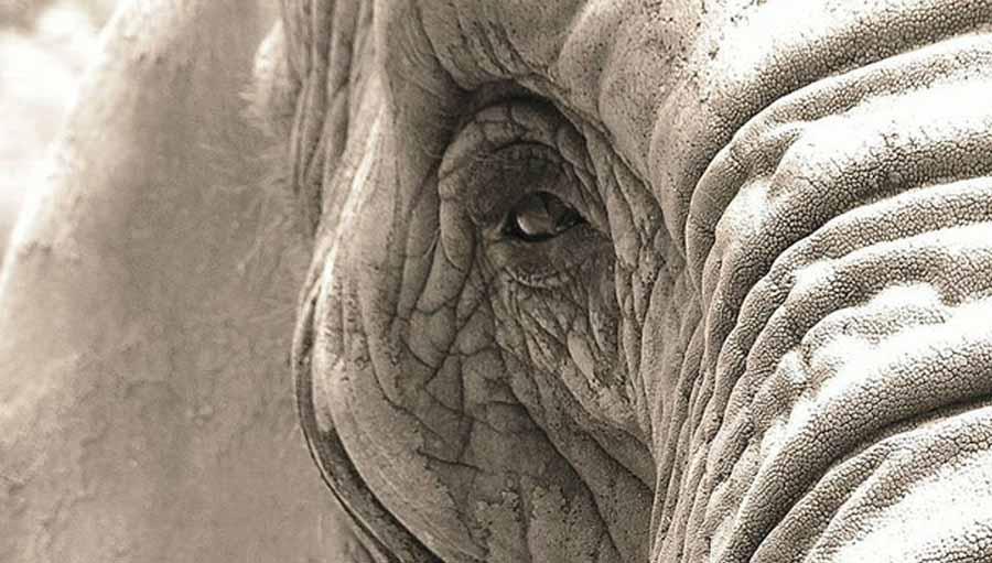 Elephant, close-up