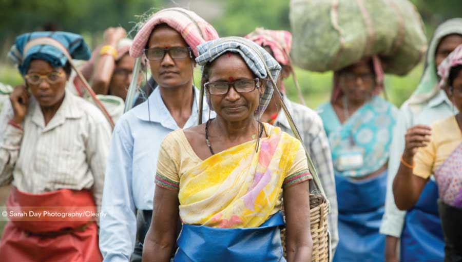 New research reveals glasses boost worker productivity. Tea-pickers; photo by Sarah Day for Clearly