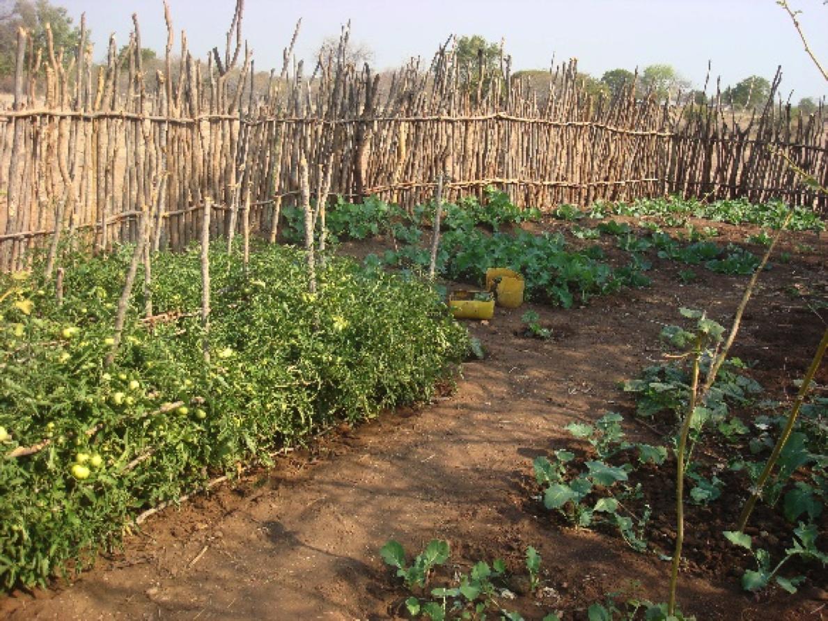 Veggie garden, OEU