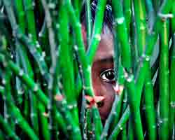 Child peeping through a plant by Pranab Basak